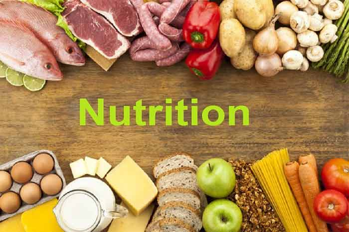 What Is The Basic Nutrition