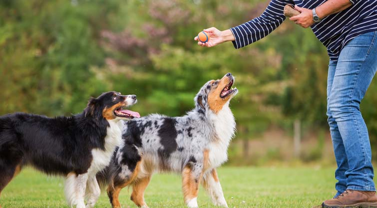 How To Choose The Best Dog Training System