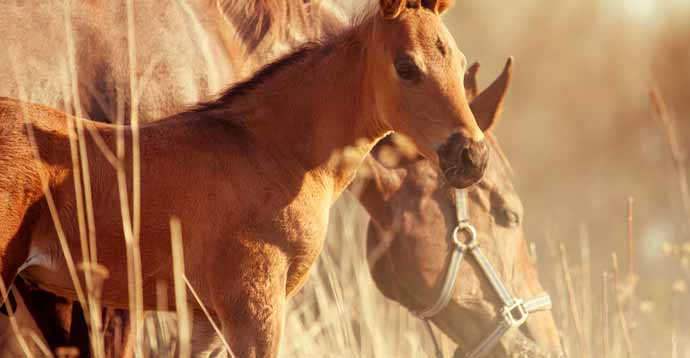 How to Identify the Best Horse Breeds