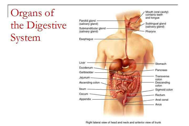 Milk Protein Decontaminates Digestive Tract