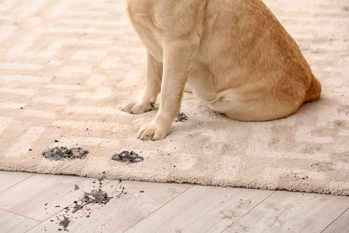 Removing Pet Stains from Furniture