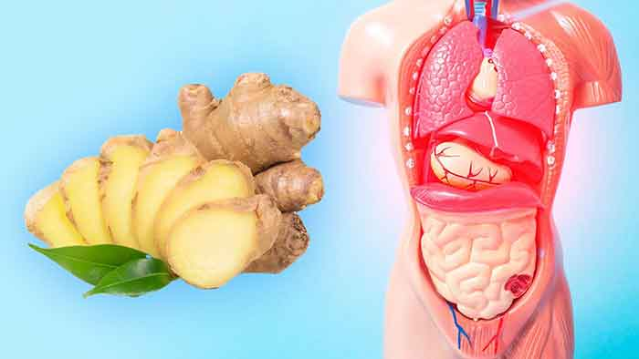 What-you-need-to-know-before-eating-ginger-for-weight-loss